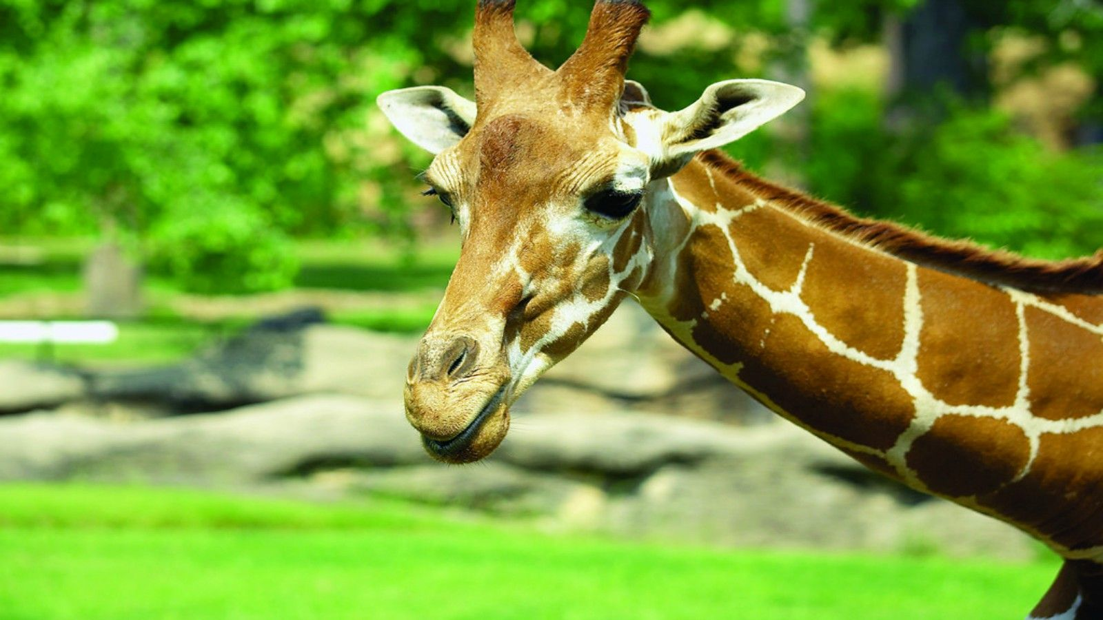 Hotels Near Little Rock Zoo - Giraffe